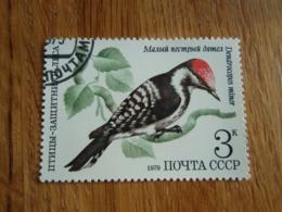 Timbre  Russie Pivert à Tête Rouge - 1923-1991 USSR