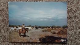 CPM CHEVAL CHEVAUX CAMARGUE GARDIAN ET MANADE ELEVAGE  DE TAUREAUX ED THEOAJAC 108 - Horses