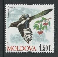 MOLDOVA 2010 Birds Of Moldova/Magpie: Single Stamp UM/MNH - Other