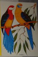 Petit Calendrier De Poche 1985  Illustration  APBP Oiseaux Exotiques Perroquets Original.peint Avec La Bouche - Calendars