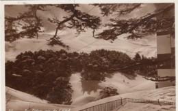 Lebanon 'Cedars Seen From Hotel' C1930s Vintage Postcard Postally Used Sc#154 - Lebanon