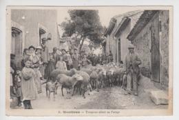 Lot De 2 CPA Montbrun - Troupeau Allant Au Pacage (très Belle Scène Avec Moutons) - France