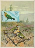Albanie Carte Maximum Oiseaux 1971 Roitelet 1313 - Albania