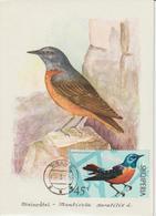 Albanie Carte Maximum Oiseaux 1971 Grive 1314 - Albanië