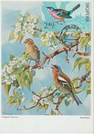 Albanie Carte Maximum Oiseaux 1971 Pinson 1316 - Albanië