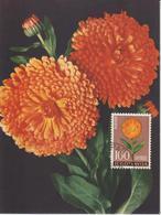 Yougoslavie Carte Maximum Fleurs 1961 Souci 851 - Cartes-maximum