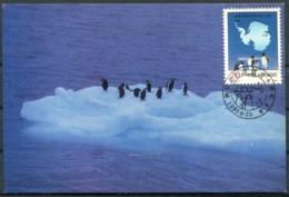 1991 China Antarctica Polar Penguin Maxicard - 1949 - ... People's Republic