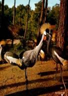 CPM - ZOO DE LA PALMYRE ROYAN - GROUPE De GRUES COURONNEES - Edition La Cigogne - Birds