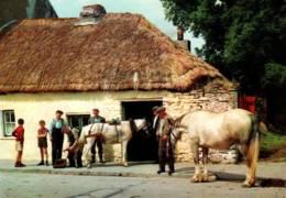 CPM - IRLANDE - MARECHAL-FERRAND ... - Chevaux