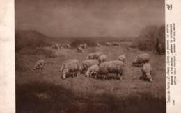 """CPA - Ernest AMAS - Né à Landrecies 1869 - """"Dans La Prairie Le Matin"""" (troupeau De Moutons)- Edition A.Noyer - Peintures & Tableaux"""
