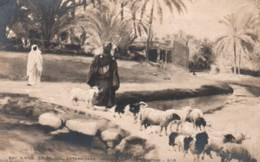"""CPA - ANTHONISSEN (Peintre BELGE) - """"LE BERGER Et SON TROUPEAU"""" (Peinture Orientaliste) - Edition S.I.P - Peintures & Tableaux"""