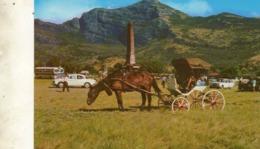 Maurice..... Port Louis  Champ De Mars    C.&.A  .310 - Mauritius