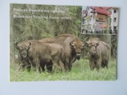 POLSKA - Bialowieza Primeval Forest Invites , Hotel Bialowiski - Pologne