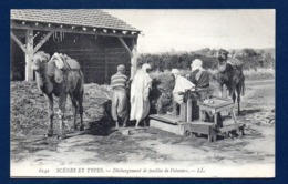 Algérie. Déchargement Des Feuilles De Palmiers Transportées Sur Chameaux. - Algeria