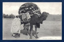 Algérie. Un Bassour De Mariée Sur Le Dos D'un Chameau. Palanquin Pour Deux Femmes Dont Voit Seulement Les Pieds - Vrouwen