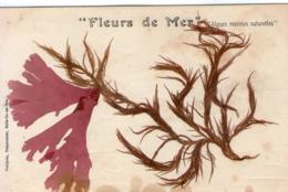 """56-algues Marines Naturelles-petitjean Preparateur Belle Ile En Mer-""""fleurs De Mer"""" - Belle Ile En Mer"""