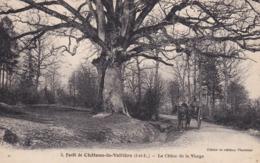 Château-la-Vallière - Le Chêne De La Vierge - Otros Municipios