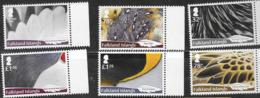FALKLAND ISLANDS, 2019, MNH,  BIRDS, FEATHERS, 6v - Vogels