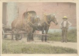AGRICULTURE : Photo-carte :  Ancien Attelage - Métiers