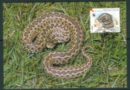 19/11 Croatie Croatia Carte Maximum Card Serpent Snake Vipere D' Orsini - Serpenti