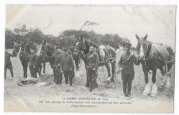 La Guerre Européenne De 1914 Les Chevaux De Traits Anglais Sont Remarquables Par Leur Puissance - Guerre 1914-18