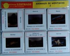 ANIMAUX DE MONTAGNE  2    : 6 DIAPOSITIVES LESTRADE SUR FILM KODAK - Dias