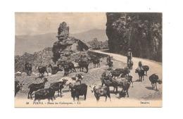 CPA 20 2A Corse Piana Dans Les Calanques , Chèvres Non écrite - France