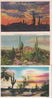USA, Alte Karten, Old Cards, Kakteen Cactus Saguaro - Etats-Unis