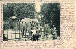 Cp Hamburg, Elefant Anton Im Zoo - Autres