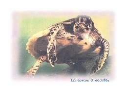 La TORTUE à Ecaille - Tirage Limité 12 Ex - Schildpadden
