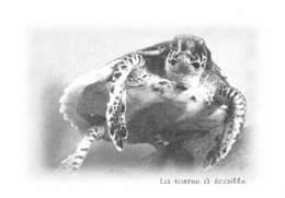 La TORTUE à écaille - Tirage Limité 12 Ex - Schildpadden