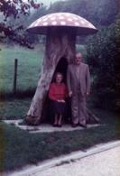 Photo Couleur Originale Anciens Sous Champignons Hallucinogènes Dans Un Tronc Creusé En 1985 - Objets