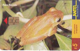 URUGUAY - Frog, Rana Rayada(100a), 02/00, Used - Uruguay