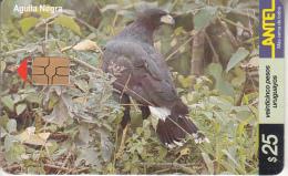 URUGUAY - Bird, Aguila Negra(152a), 10/00, Used - Uruguay