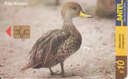 URUGUAY - Bird, Pato Maicero(147a), 10/00, Used - Uruguay