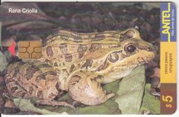 URUGUAY - Frog, Rana Criolla(99a), 02/00, Used - Uruguay