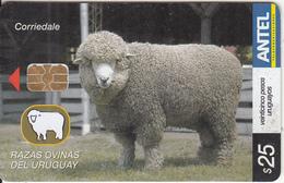 URUGUAY - Animal, Corriedale(437a), 06/06, Used - Uruguay