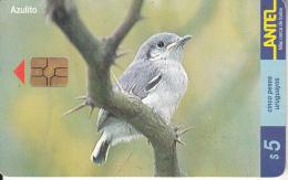 URUGUAY - Bird, Azulito(126a), 06/00, Used - Uruguay