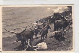 Ruanda - Heilige Tiere - Schöne Frankatur - 1938           (A-138-190413) - Ruanda-Urundi