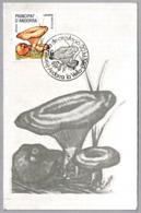 Seta LACTARIUS SANGUIFLUUS - Mushroom. Andorra 1983 - Hongos