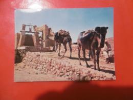 Sahara - Halte Au Puits - Autres Villes