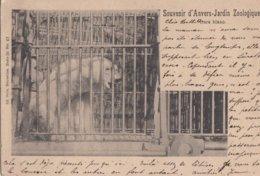 ANTWERPEN / DIERENTUIN / ZOO  1901 - Antwerpen
