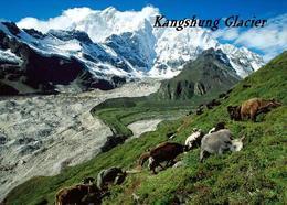 Tibet Kangshung Glacier New Postcard - Tíbet