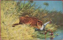 Leopard Luipaard Jaguar Panther Panthère Panthera Pardus Illustrator Illustrateur Artist M. Muller - Tijgers