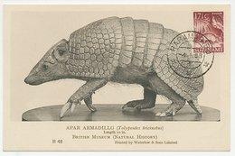 Maximum Card Suriname 1958 Armadillo - Unclassified