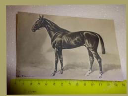 Photo Cheval Courses De Chevaux De Trotteur Courses De L'hippodrome KARL 1909 VOLKERS - Reitsport