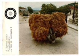 POSTAL POST CARD BURRO BURROS BURRITO DONKEY DONKEYS BORRICO ÂNE MULI DONK ......PROTECCIÓN ANIMAL PROTECTION OF ANIMALS - Burros