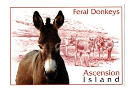 POSTAL POST CARD BURRO BURROS BURRITO DONKEY FERAL DONKEYS BORRICO ÂNE MULI DONK ASCENSION ISLAND ISLA ATLANTIC OCEAN... - Burros