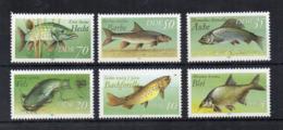 GERMANIA DDR - 1987 - Animali - PESCI - 6 Valori - Nuovi ** -  (FDC18548) - Nuovi