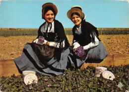 Les Violettes De TOULOUSE Cueillette A Aucamville En Costume Regional 14(scan Recto-verso) MA1867 - Toulouse